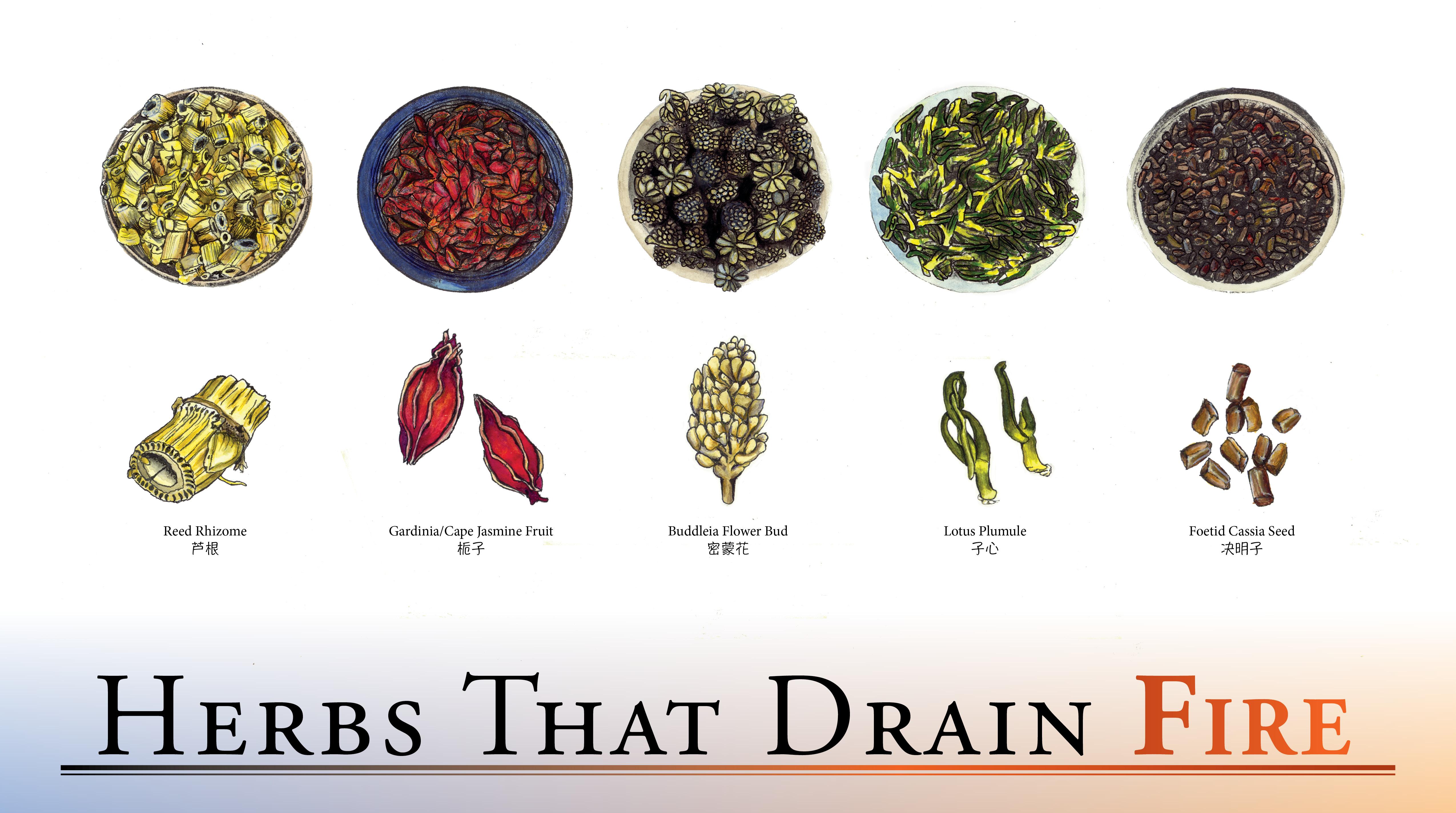 Herbs That Drain Fire