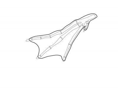 Bird Foot Skeletal Schematics – Loon
