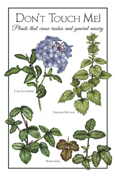 Skin Irritants: Poison Oak, Cape Leadwort, Stinging Nettles