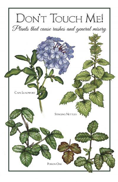 Skin Irritants: Poison Oak, Cape Leadwort, Stinging Nettles